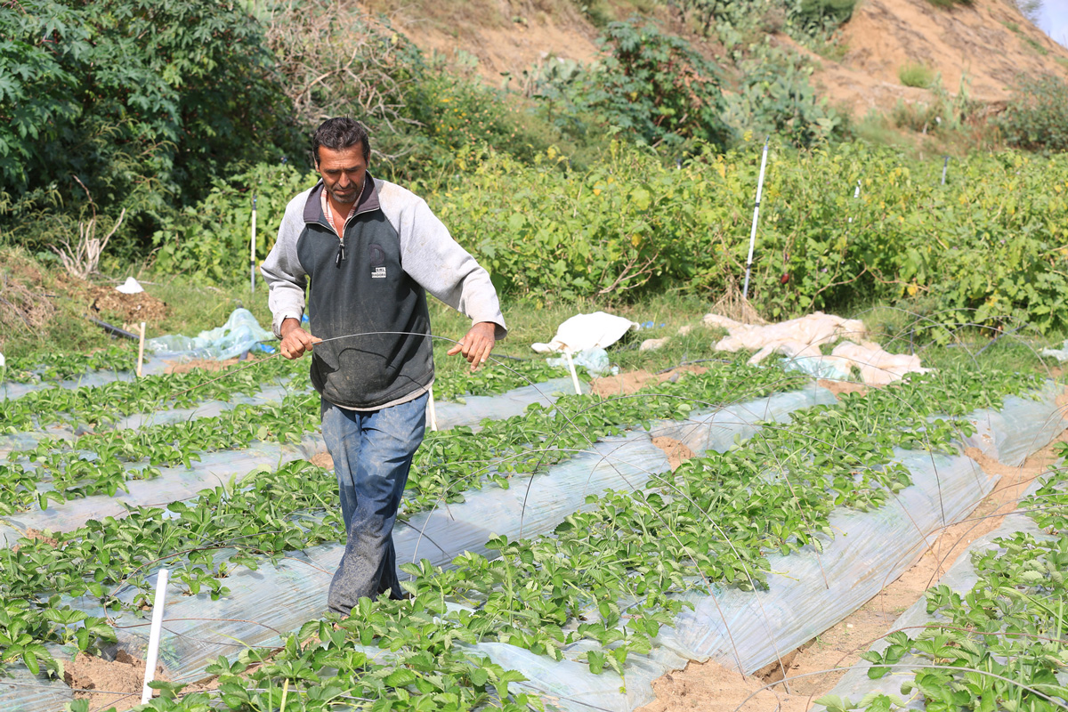 Marwan Al Adham's family is one of 578 Palestine refugee families who accepted a temporary employment opportunity through UNRWA's Early Recovery project. © 2015 UNRWA Photo Tamer Hamam