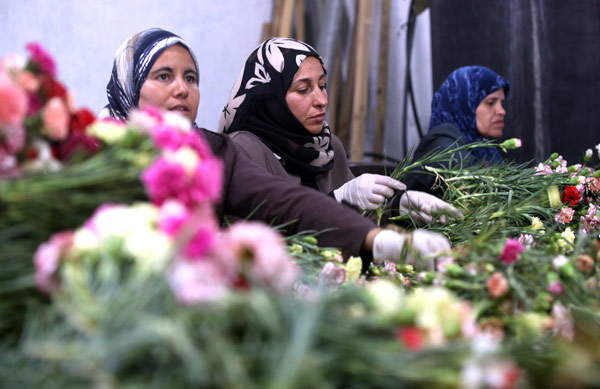 Women on a carnation farm in Rafah, employed through the UNRWA Job Creation Programme, are bundling flowers destined for the local Gaza market. © 2015 UNRWA Photo by Khalil Adwan