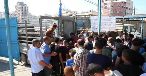 "UNRWA distributed 695 live sheep to 2,085 Palestine refugee families in the Gaza Strip, through the ""Supporting Poor Families during Al-Adha Eid"" project, thanks to a generous contribution from Islamic Relief USA. ©UNRWA Gaza 2016. Photo by Tamer Hamam."