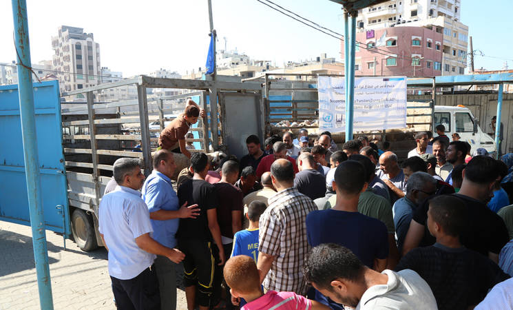 """UNRWA distributed 695 live sheep to 2,085 Palestine refugee families in the Gaza Strip, through the """"Supporting Poor Families during Al-Adha Eid"""" project, thanks to a generous contribution from Islamic Relief USA. ©UNRWA Gaza 2016. Photo by Tamer Hamam."""