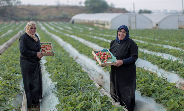 Women received three-month work opportunity as a labourer in an agriculture project in Beit Lahia in northern Gaza Strip as part of the UNRWA Job Creation Programme. © 2017 UNRWA Photo by Rushdi Al-Saraj