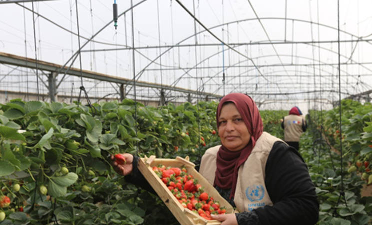 42-year-old Palestine refugee Tahani Ali, who lives with her seven-member family in Beit Lahia, in northern Gaza, received a three-month work opportunity as a labourer in an agriculture project as part of UNRWA cash-for-work programme. © 2019 UNRWA Photo by Ahmed al-Asmar