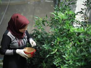 إرادة تميل إلى مزرعتها المائية في بيت حانون ، غزة. الحقوق محفوظة للأونروا ، 2019