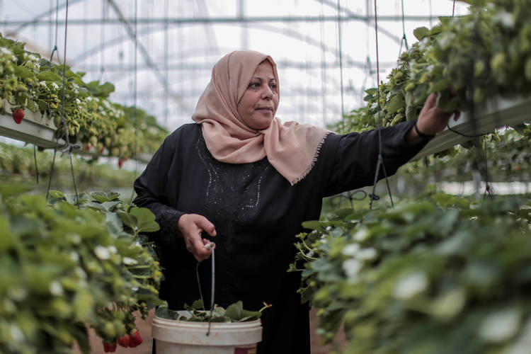 41-year-old Palestine refugee Enshirah Al-Batah, who lives with her nine-member family in Beit Lahia, works as a labourer in an agriculture project through the UNRWA Job Creation Programme. © 2017 UNRWA Photo by Rushdi Al-Saraj
