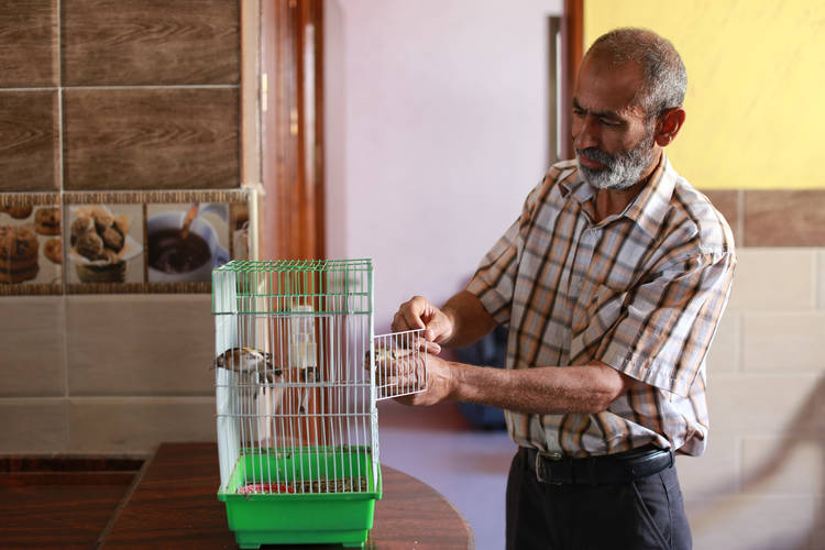 Shukri Ali's birds were buried under the rubble when his house was totally damaged during the 2014 conflict. When he returned to his newly reconstructed home, he bought new ones. © 2016 UNRWA Photo by Rushdi al-Sarraj