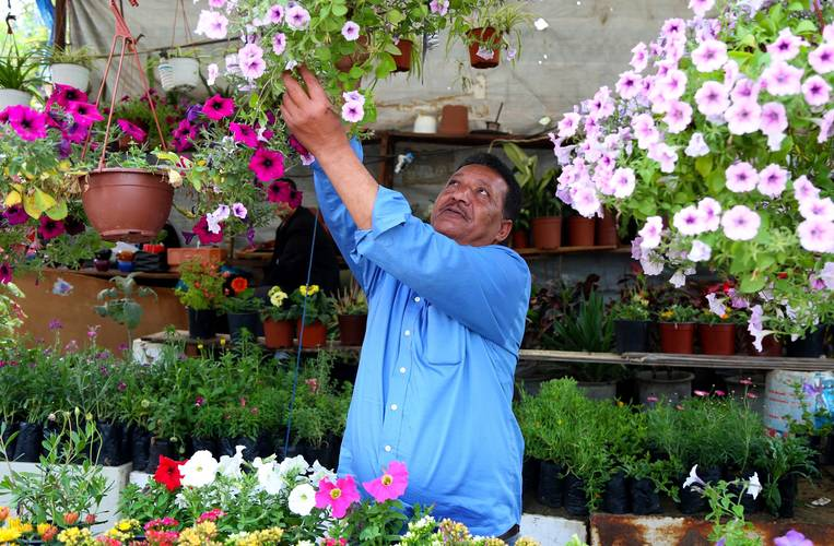 Yousef Abu-Mari, a 51-year-old Palestine refuge from Gaza, owns a plant nursery and has been a client of the UNRWA Microfinance Programme in Gaza for more than two years. © 2018 UNRWA Photo by Khalil Adwan